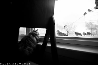 Marco and the Morning Doves | Turkish Angora